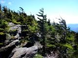 Grandfather Profile Trail to Calloway Peak: A Day on Old ManMountain