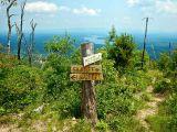 Shortoff Mountain: Toads, Ticks and TerrificViews