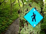 """Elk Knob: A Quick Hike on the """"Fly"""""""